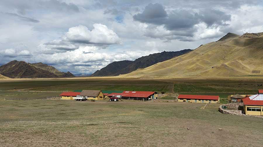 Alpakafarm Peru