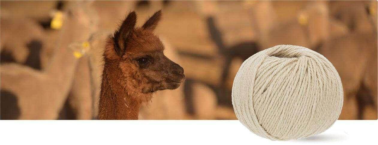 Rot 6 x 50g kratzfrei - 300g Set - weiche Alpaka Wolle zum Stricken /& H/äkeln in 6 Garnst/ärken by Hansa-Farm 100/% Baby Alpakawolle in 50+ Farben